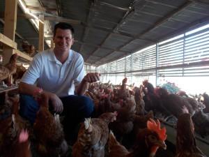 eggs farm 025