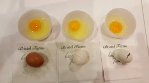 Egg Yolk Differences